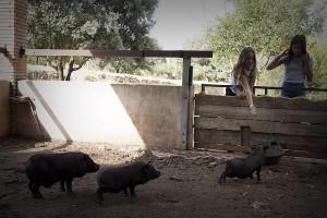 animals_porc_menjar1