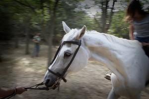 equitacion_caball